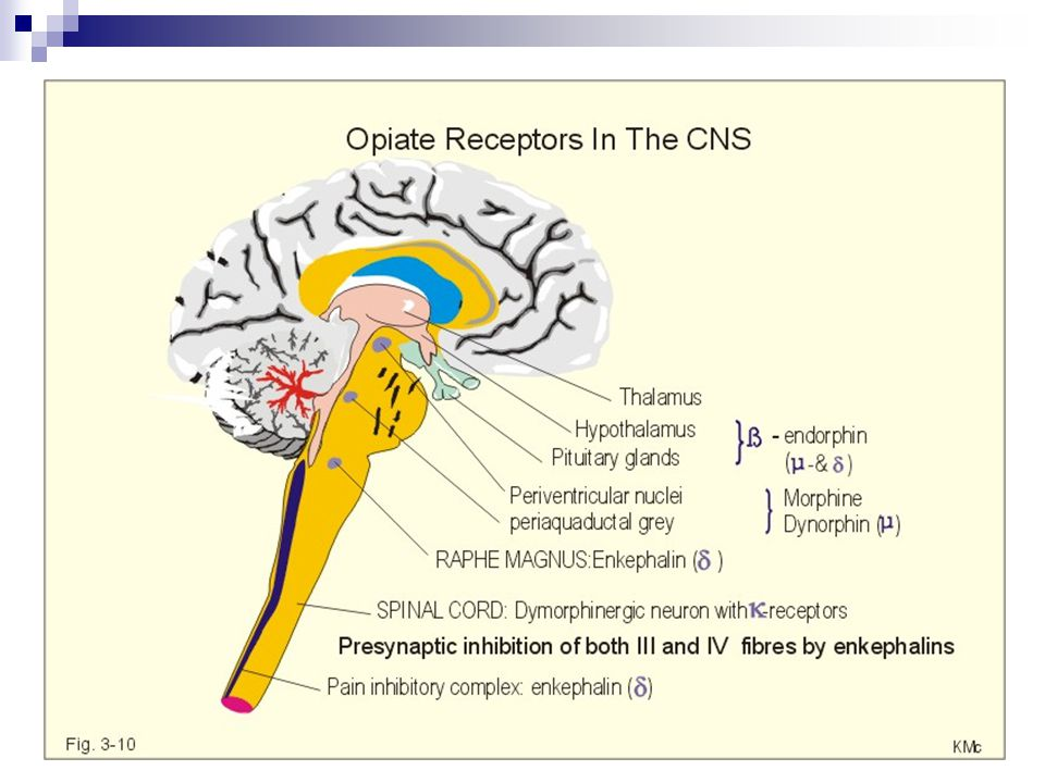 OP1  Delta (δ) OP2  Kappa (κ) OP3  Mü (µ) ORL-1 (orphan)  nociceptin (orphanin FQ) *spinal analjezi - nalokson tarafından bloke edilmez - pro-orphan'dan kaynaklanır Endomorfin I, II (Mü selektif) Sigma (σ): Disfori Halusinasyon Vazomotor stimulasyon Solunum stimulasyonu ***Opioid reseptörü olarak kabul edilmez