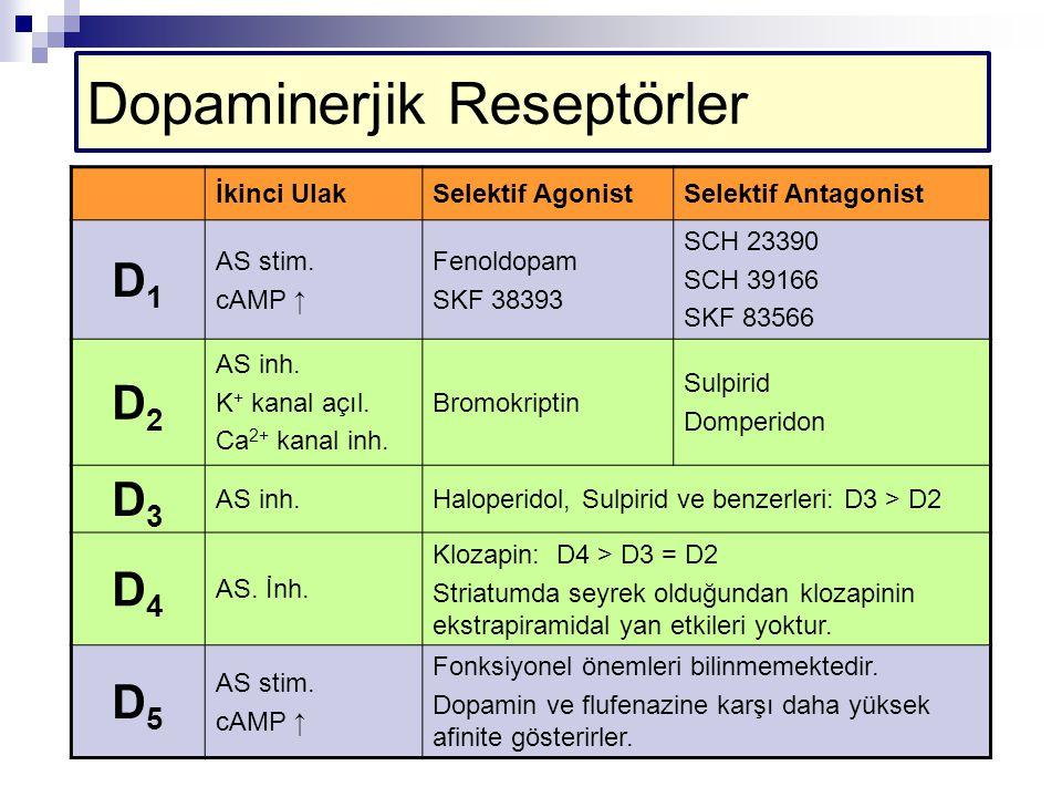 Dopaminerjik Reseptörler İkinci UlakSelektif AgonistSelektif Antagonist D1D1 AS stim. cAMP ↑ Fenoldopam SKF 38393 SCH 23390 SCH 39166 SKF 83566 D2D2 A