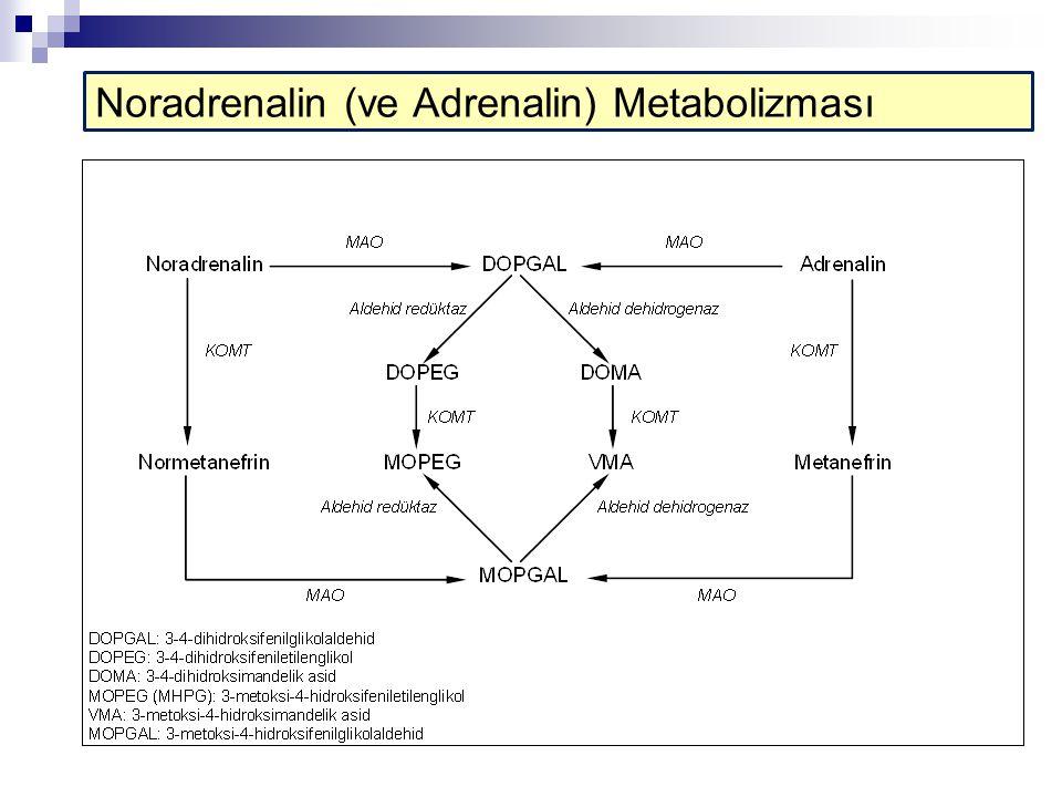 Noradrenalin (ve Adrenalin) Metabolizması