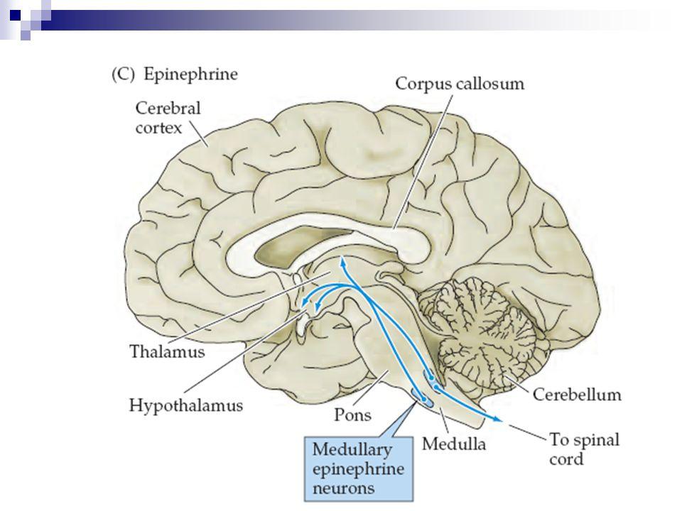 Noradrenalin Locus coeruleus (LC)  Beyin noradrenalin içeriğinin yaklaşık % 70'i LC'de bulunur.