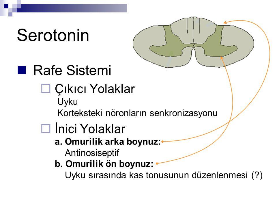 Serotonin Rafe Sistemi  Çıkıcı Yolaklar Uyku Korteksteki nöronların senkronizasyonu  İnici Yolaklar a.