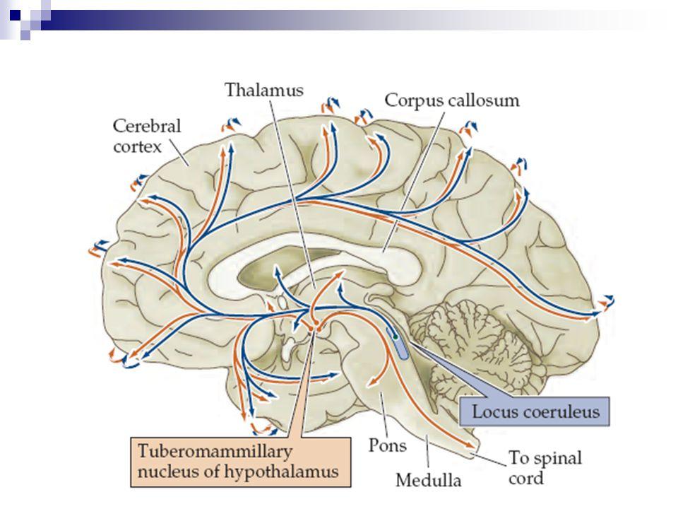 Fizyolojik Önemi Öğrenme ve bellek Alzheimer hastalığında kolinerjik hipoaktivite Ekstrapiramidal sistemin dengeli çalışması Kolinerjik/Dopaminerjik oran:  Parkinson hastalığı  Huntington koresi Giles de la Tourette hastalığı Friedreich hastalığı