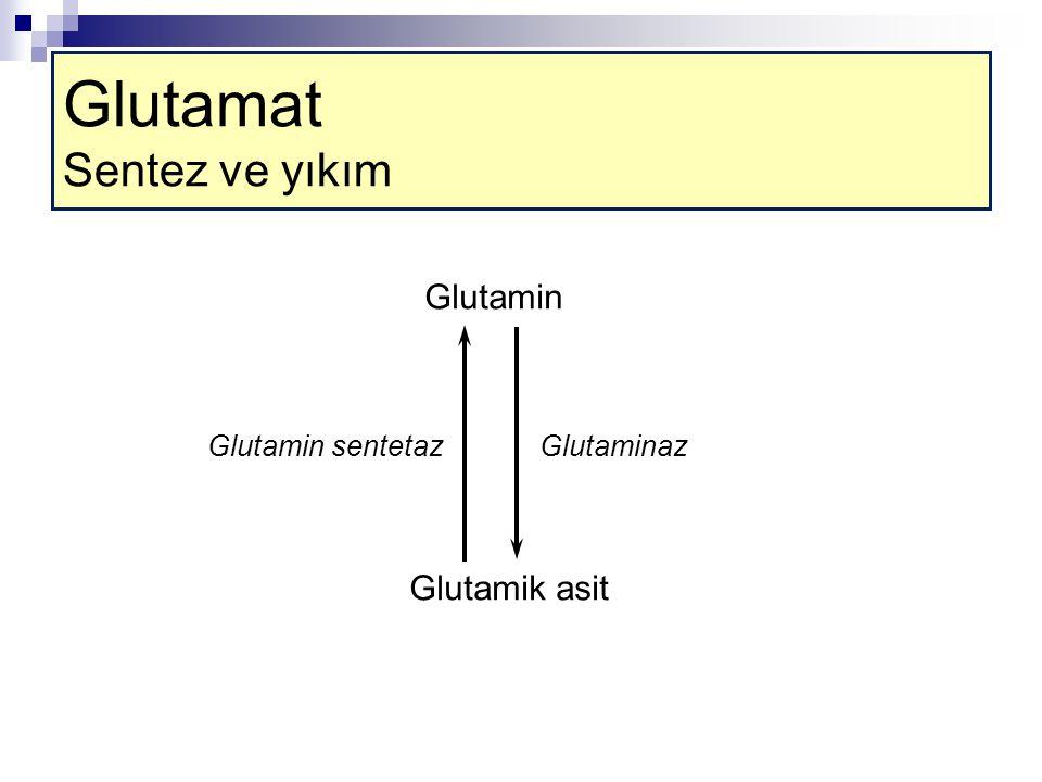 Glutamik asit Glutamin GlutaminazGlutamin sentetaz Glutamat Sentez ve yıkım