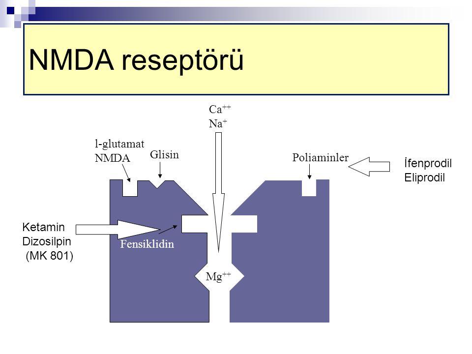 l-glutamat NMDA Glisin Fensiklidin Mg ++ Poliaminler Ca ++ Na + Ketamin Dizosilpin (MK 801) İfenprodil Eliprodil NMDA reseptörü