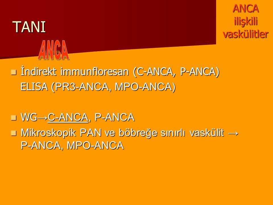 TANI İndirekt immunfloresan (C-ANCA, P-ANCA) İndirekt immunfloresan (C-ANCA, P-ANCA) ELISA ( PR3-ANCA, MPO-ANCA) ELISA ( PR3-ANCA, MPO-ANCA) WG →C-ANC