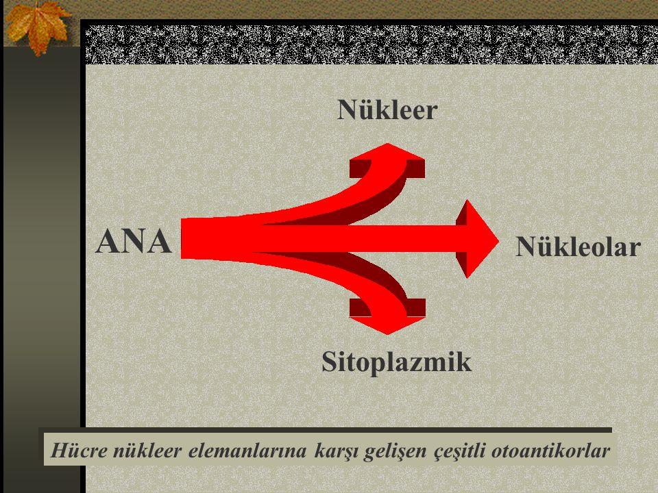 ANA Hücre nükleer elemanlarına karşı gelişen çeşitli otoantikorlar Nükleer Nükleolar Sitoplazmik