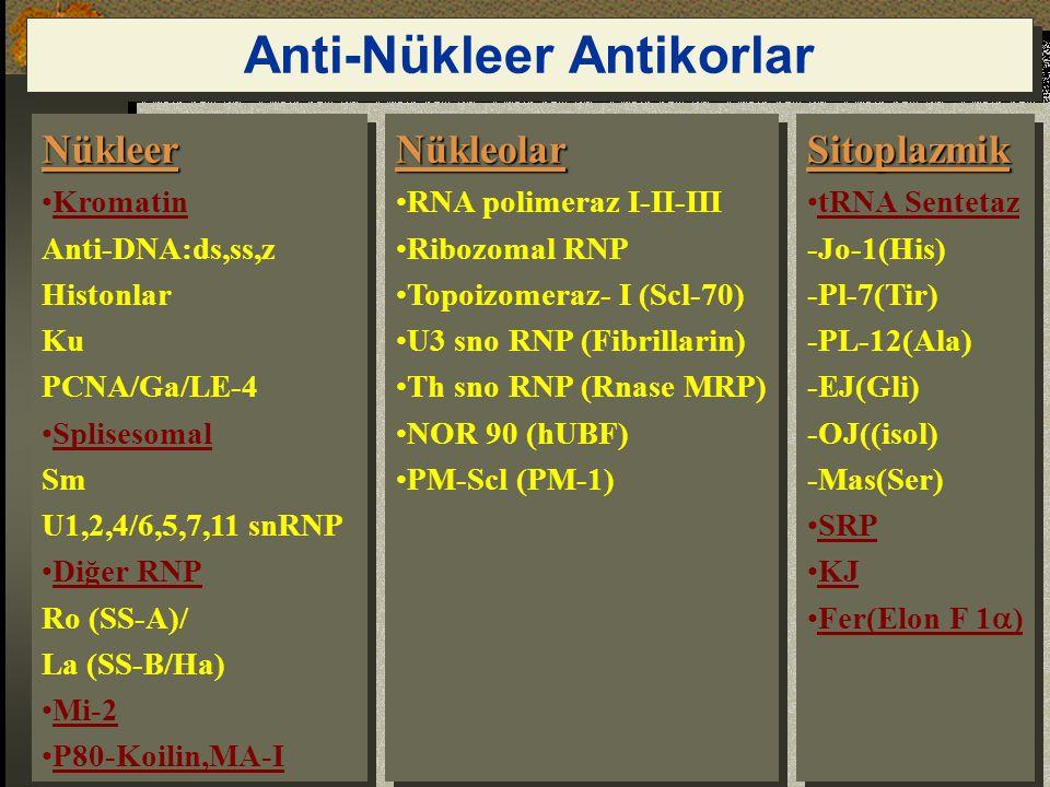 Nükleer Kromatin Anti-DNA:ds,ss,z Histonlar Ku PCNA/Ga/LE-4 Splisesomal Sm U1,2,4/6,5,7,11 snRNP Diğer RNP Ro (SS-A)/ La (SS-B/Ha) Mi-2 P80-Koilin,MA-INükleer Kromatin Anti-DNA:ds,ss,z Histonlar Ku PCNA/Ga/LE-4 Splisesomal Sm U1,2,4/6,5,7,11 snRNP Diğer RNP Ro (SS-A)/ La (SS-B/Ha) Mi-2 P80-Koilin,MA-INükleolar RNA polimeraz I-II-III Ribozomal RNP Topoizomeraz- I (Scl-70) U3 sno RNP (Fibrillarin) Th sno RNP (Rnase MRP) NOR 90 (hUBF) PM-Scl (PM-1)Nükleolar RNA polimeraz I-II-III Ribozomal RNP Topoizomeraz- I (Scl-70) U3 sno RNP (Fibrillarin) Th sno RNP (Rnase MRP) NOR 90 (hUBF) PM-Scl (PM-1)Sitoplazmik tRNA Sentetaz -Jo-1(His) -Pl-7(Tir) -PL-12(Ala) -EJ(Gli) -OJ((isol) -Mas(Ser) SRP KJ Fer(Elon F 1  )Sitoplazmik tRNA Sentetaz -Jo-1(His) -Pl-7(Tir) -PL-12(Ala) -EJ(Gli) -OJ((isol) -Mas(Ser) SRP KJ Fer(Elon F 1  ) Anti-Nükleer Antikorlar