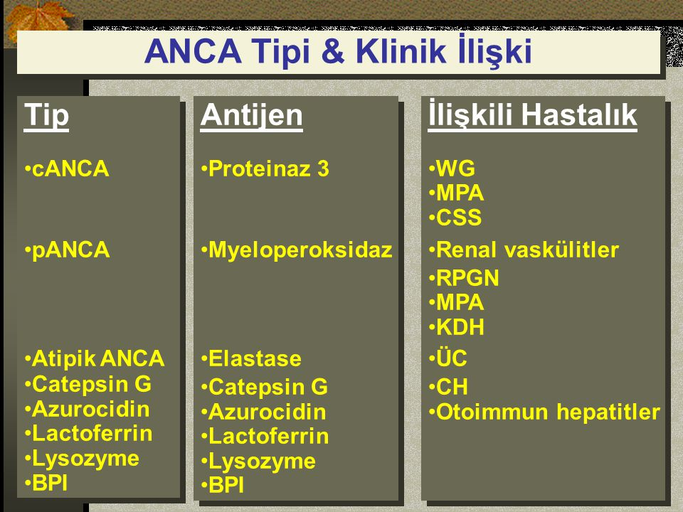 ANCA Tipi & Klinik İlişki Tip cANCA pANCA Atipik ANCA Catepsin G Azurocidin Lactoferrin Lysozyme BPI Tip cANCA pANCA Atipik ANCA Catepsin G Azurocidin Lactoferrin Lysozyme BPI Antijen Proteinaz 3 Myeloperoksidaz Elastase Catepsin G Azurocidin Lactoferrin Lysozyme BPI Antijen Proteinaz 3 Myeloperoksidaz Elastase Catepsin G Azurocidin Lactoferrin Lysozyme BPI İlişkili Hastalık WG MPA CSS Renal vaskülitler RPGN MPA KDH ÜC CH Otoimmun hepatitler İlişkili Hastalık WG MPA CSS Renal vaskülitler RPGN MPA KDH ÜC CH Otoimmun hepatitler