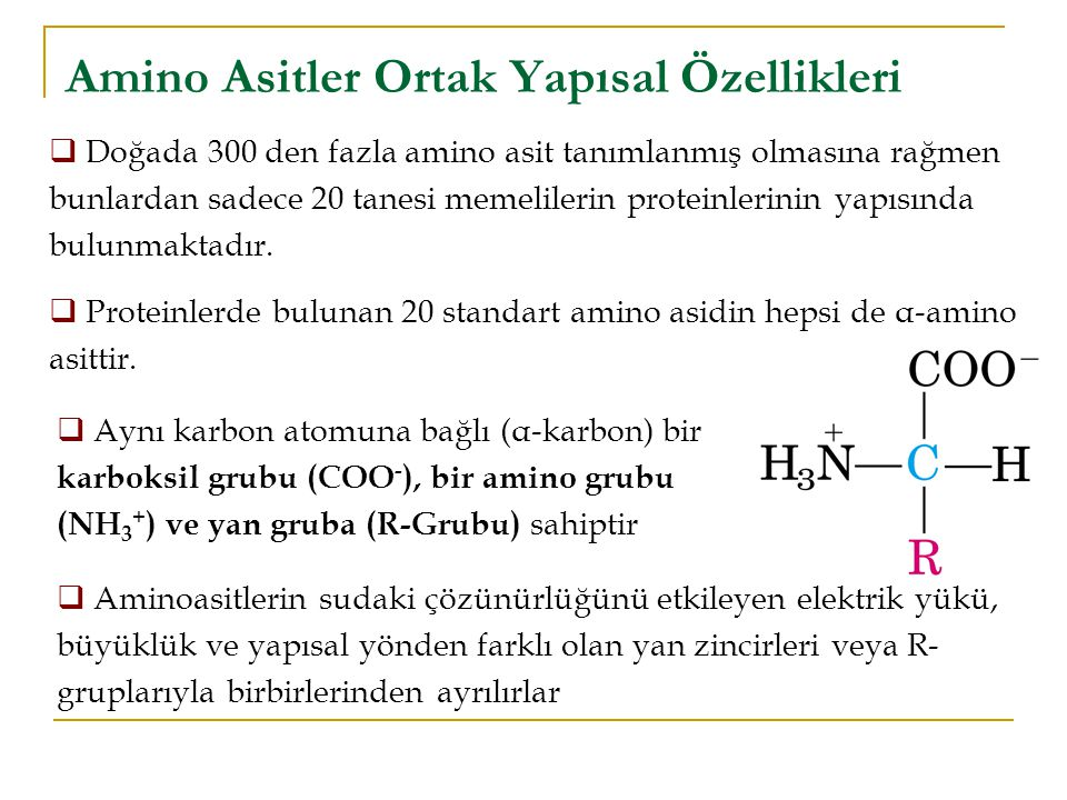 Amino Asitler Ortak Yapısal Özellikleri  Doğada 300 den fazla amino asit tanımlanmış olmasına rağmen bunlardan sadece 20 tanesi memelilerin proteinlerinin yapısında bulunmaktadır.