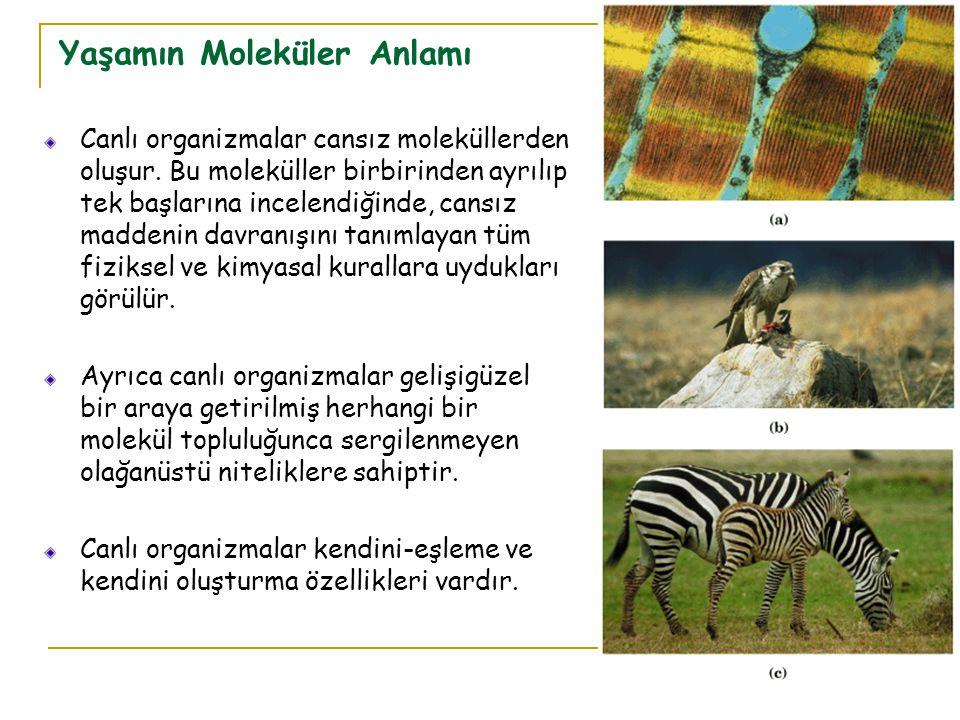 Yaşamın Moleküler Anlamı Canlı organizmalar cansız moleküllerden oluşur.