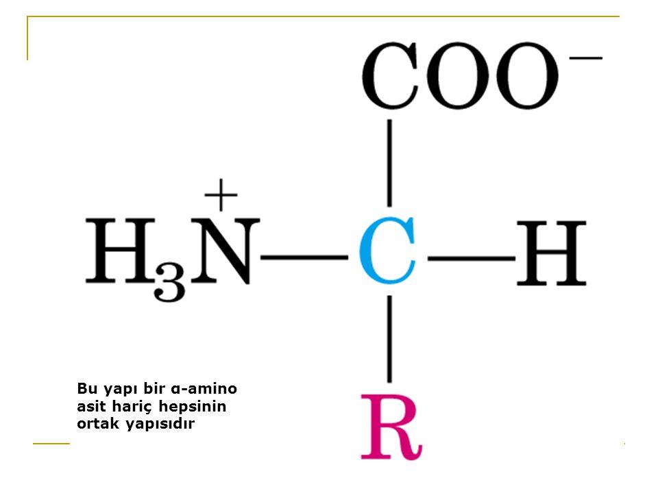 Bu yapı bir α-amino asit hariç hepsinin ortak yapısıdır