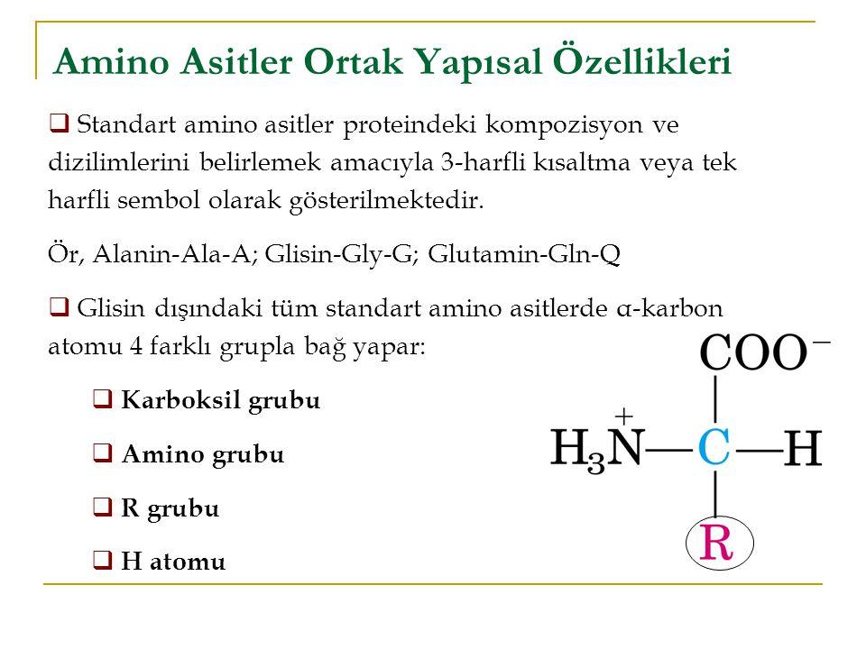 Amino Asitler Ortak Yapısal Özellikleri  Standart amino asitler proteindeki kompozisyon ve dizilimlerini belirlemek amacıyla 3-harfli kısaltma veya tek harfli sembol olarak gösterilmektedir.