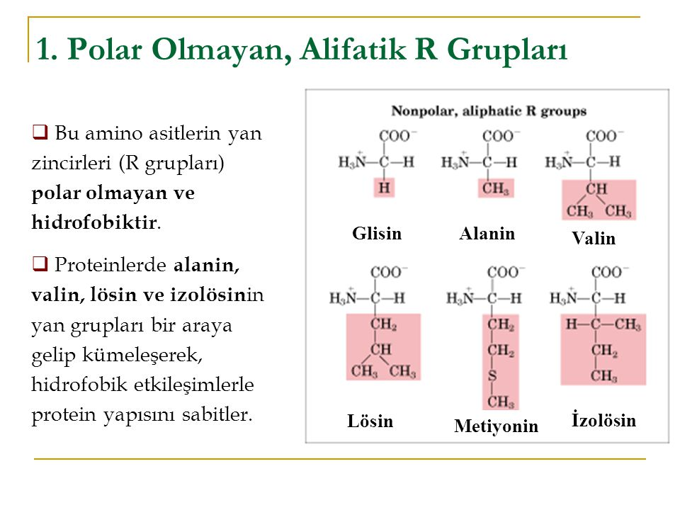 1. Polar Olmayan, Alifatik R Grupları GlisinAlanin Valin İzolösin Metiyonin Lösin  Bu amino asitlerin yan zincirleri (R grupları) polar olmayan ve hi