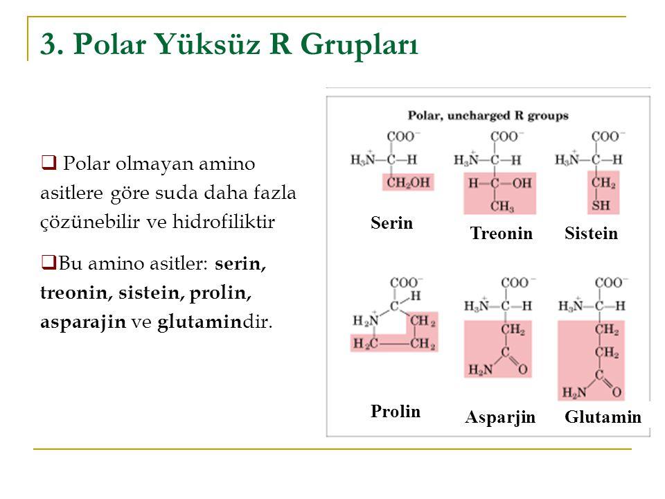 3. Polar Yüksüz R Grupları Serin TreoninSistein Glutamin Asparjin Prolin  Polar olmayan amino asitlere göre suda daha fazla çözünebilir ve hidrofilik