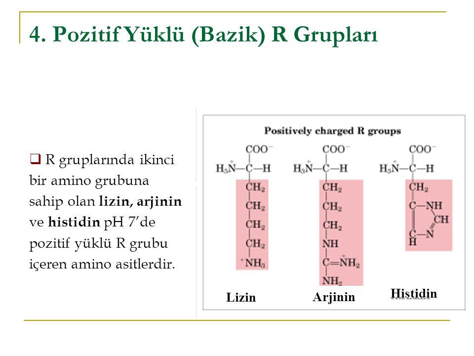 4. Pozitif Yüklü (Bazik) R Grupları Lizin Arjinin Histidin  R gruplarında ikinci bir amino grubuna sahip olan lizin, arjinin ve histidin pH 7'de pozi