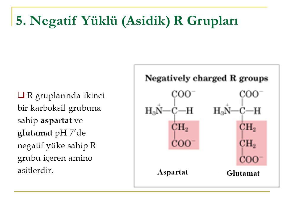 Aspartat Glutamat 5. Negatif Yüklü (Asidik) R Grupları  R gruplarında ikinci bir karboksil grubuna sahip aspartat ve glutamat pH 7'de negatif yüke sa