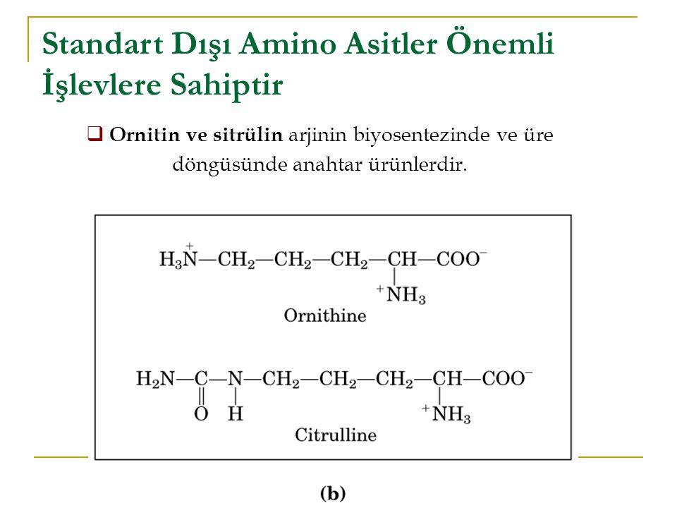  Ornitin ve sitrülin arjinin biyosentezinde ve üre döngüsünde anahtar ürünlerdir.