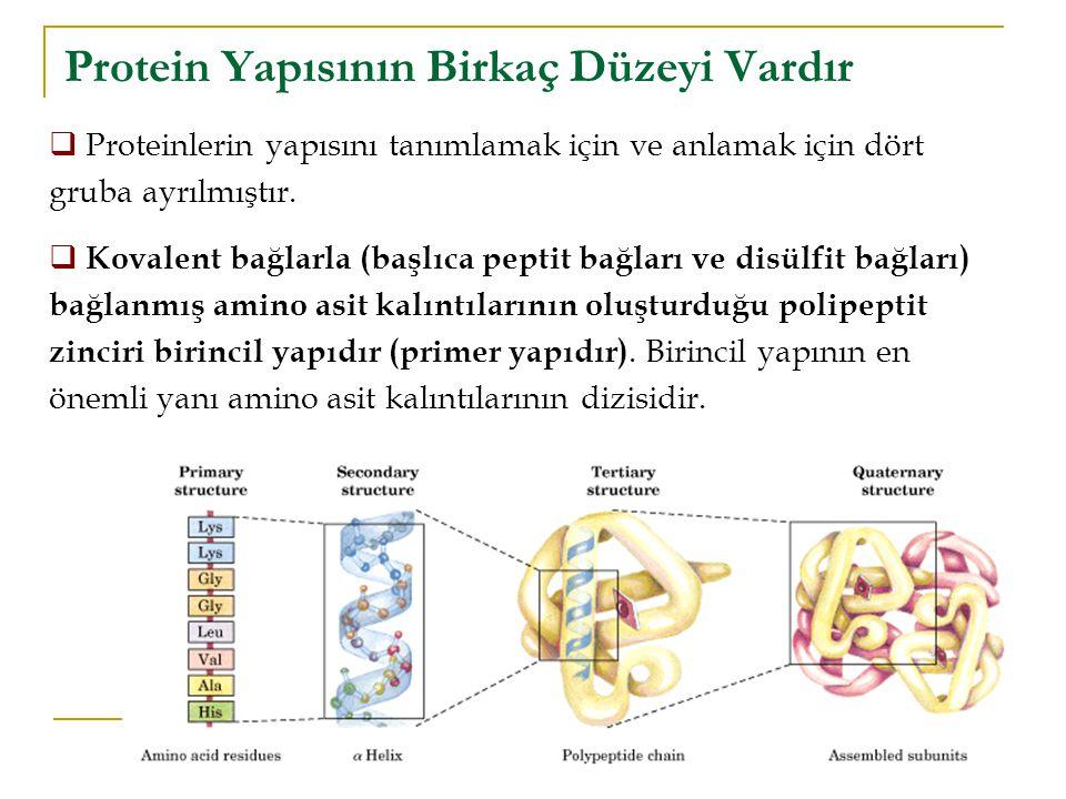Protein Yapısının Birkaç Düzeyi Vardır  Proteinlerin yapısını tanımlamak için ve anlamak için dört gruba ayrılmıştır.  Kovalent bağlarla (başlıca pe