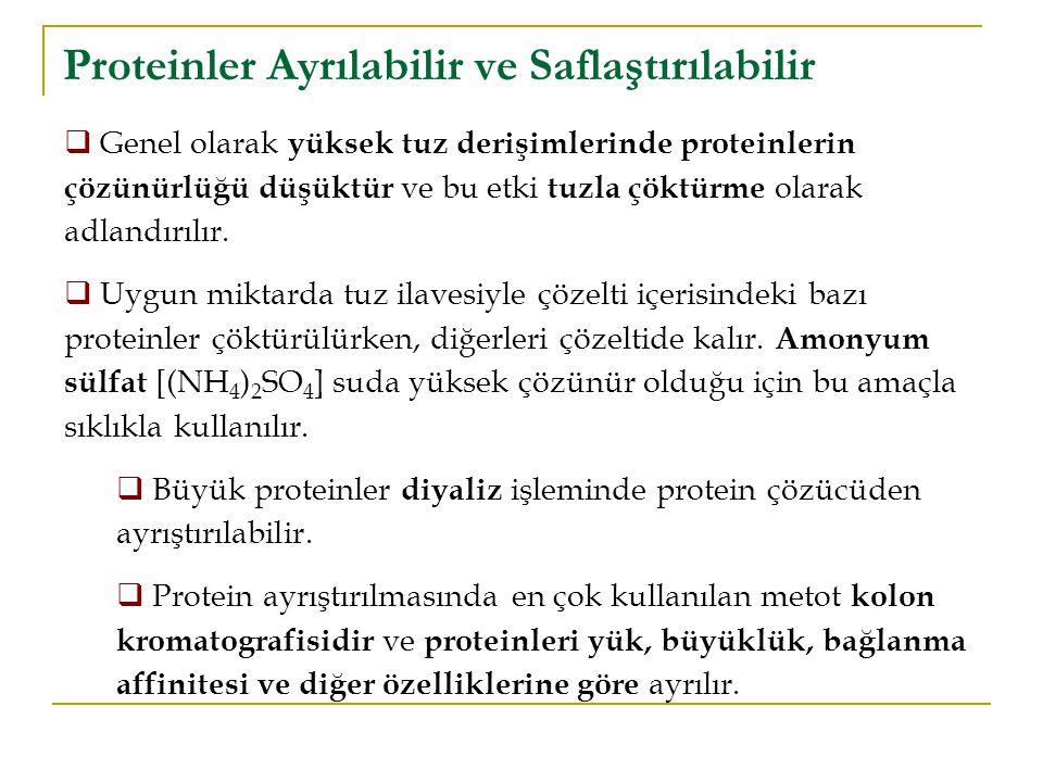 Proteinler Ayrılabilir ve Saflaştırılabilir  Genel olarak yüksek tuz derişimlerinde proteinlerin çözünürlüğü düşüktür ve bu etki tuzla çöktürme olara