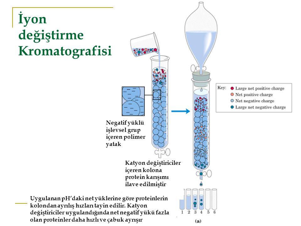 İyon değiştirme Kromatografisi Negatif yüklü işlevsel grup içeren polimer yatak Katyon değiştiriciler içeren kolona protein karışımı ilave edilmiştir Uygulanan pH'daki net yüklerine göre proteinlerin kolondan ayrılış hızları tayin edilir.