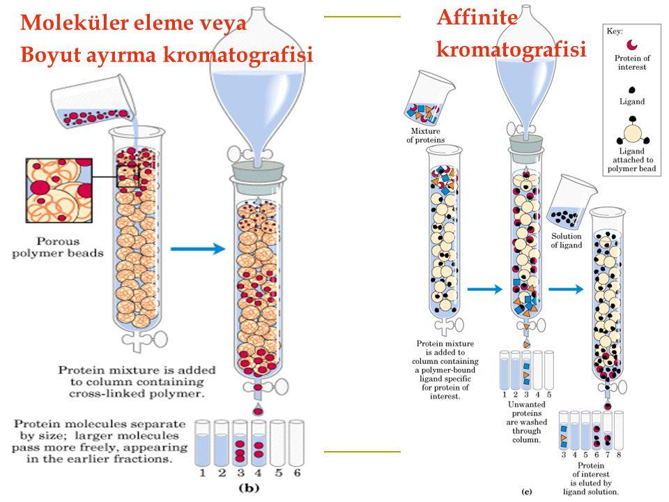 Moleküler eleme veya Boyut ayırma kromatografisi Affinite kromatografisi