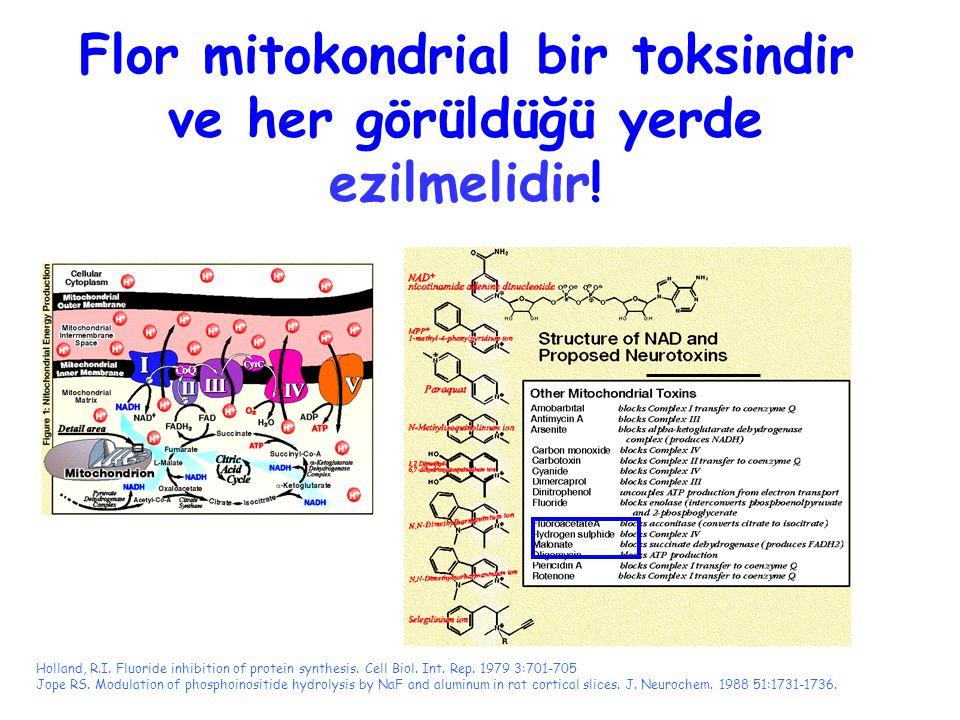 Flor mitokondrial bir toksindir ve her görüldüğü yerde ezilmelidir! Holland, R.I. Fluoride inhibition of protein synthesis. Cell Biol. Int. Rep. 1979