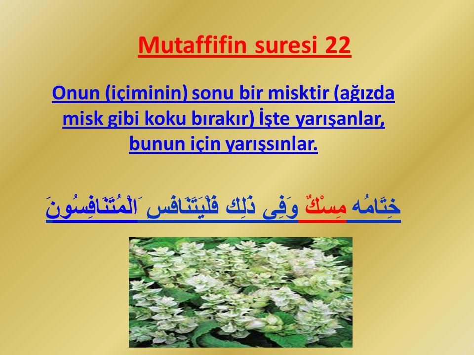 Mutaffifin suresi 22 Onun (içiminin) sonu bir misktir (ağızda misk gibi koku bırakır) İşte yarışanlar, bunun için yarışsınlar. ذَلِك فَلْيَتَنَافَسِ َ