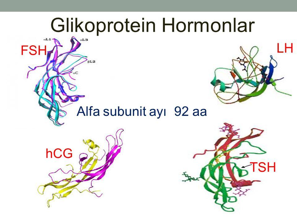 Alfa subunit ayı 92 aa FSH LH hCG TSH Glikoprotein Hormonlar