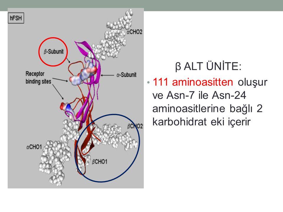 β ALT ÜNİTE: 111 aminoasitten oluşur ve Asn-7 ile Asn-24 aminoasitlerine bağlı 2 karbohidrat eki içerir