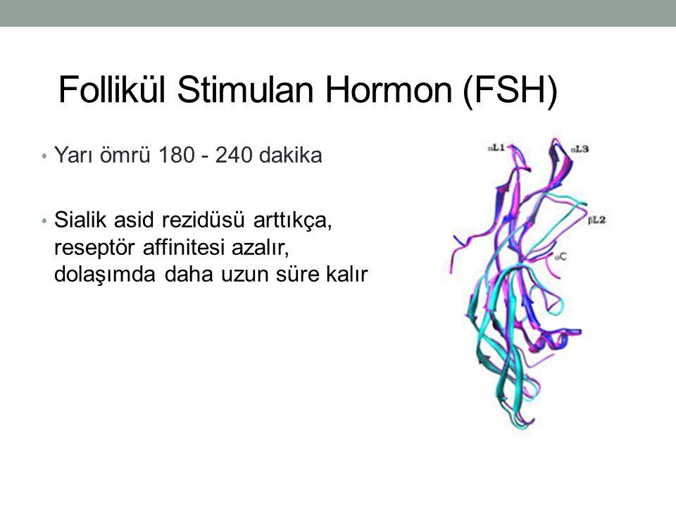 Follikül Stimulan Hormon (FSH) Yarı ömrü 180 - 240 dakika Sialik asid rezidüsü arttıkça, reseptör affinitesi azalır, dolaşımda daha uzun süre kalır