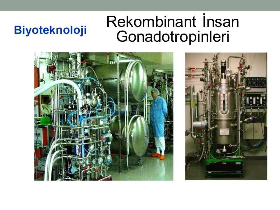 Rekombinant İnsan Gonadotropinleri