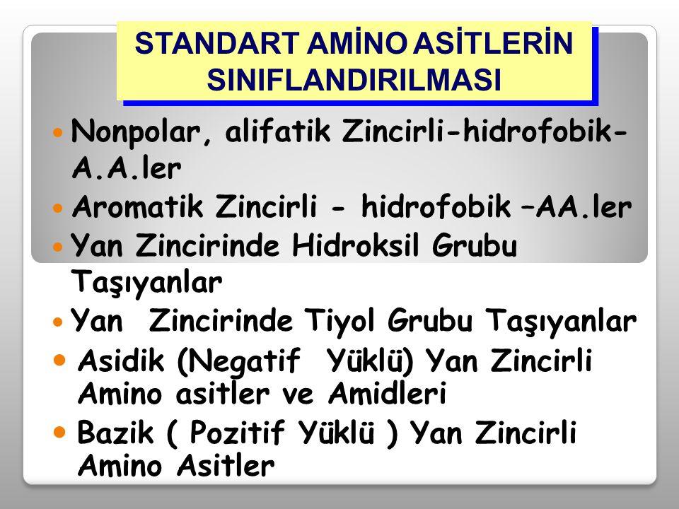 Nonpolar, alifatik Zincirli-hidrofobik- A.A.ler Aromatik Zincirli - hidrofobik –AA.ler Yan Zincirinde Hidroksil Grubu Taşıyanlar Yan Zincirinde Tiyol