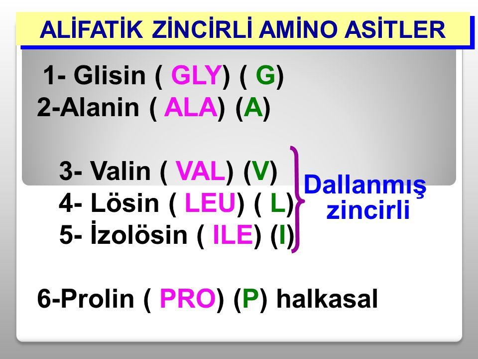 ALİFATİK ZİNCİRLİ AMİNO ASİTLER Dallanmış zincirli 1- Glisin ( GLY) ( G) 2-Alanin ( ALA) (A) 3- Valin ( VAL) (V) 4- Lösin ( LEU) ( L) 5- İzolösin ( IL