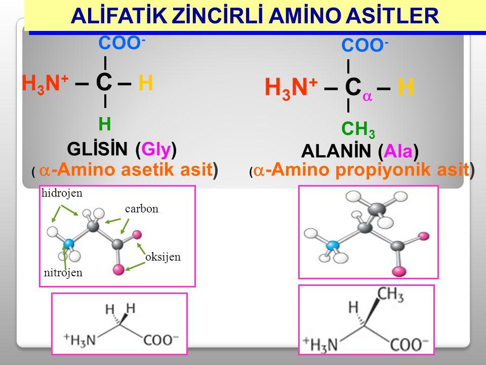 GLİSİN (Gly) (  -Amino asetik asit) H 3 N + – C – H COO - H ALİFATİK ZİNCİRLİ AMİNO ASİTLER COO - H 3 N + – C  – H CH 3 ALANİN (Ala) (  -Amino prop
