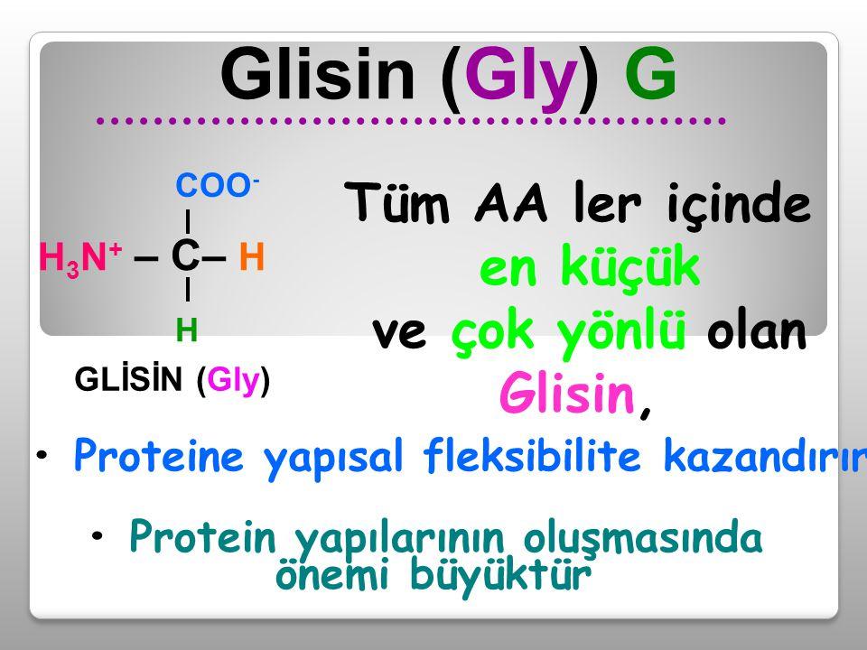 Glisin (Gly) G Protein yapılarının oluşmasında önemi büyüktür H 3 N + – C– H COO - H GLİSİN (Gly) Tüm AA ler içinde en küçük ve çok yönlü olan Glisin,