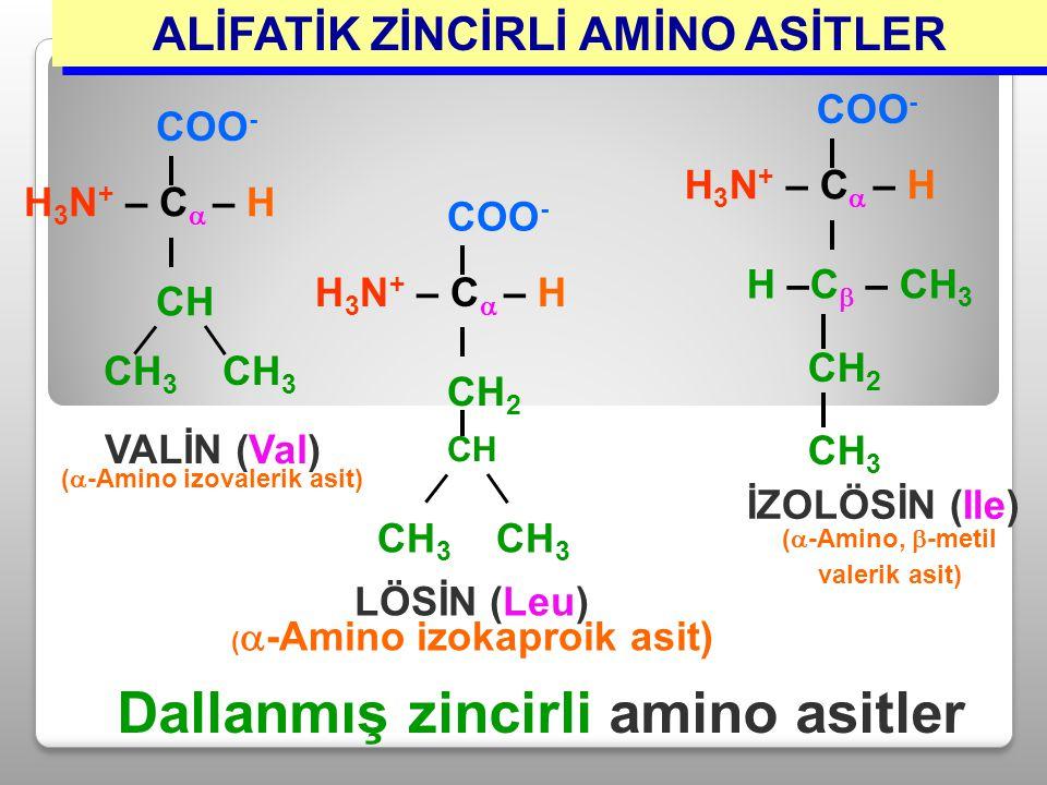 ALİFATİK ZİNCİRLİ AMİNO ASİTLER CH 3 H 3 N + – C  – H COO - CH VALİN (Val) (  -Amino izovalerik asit) H 3 N + – C  – H COO - H –C  – CH 3 CH 2 CH