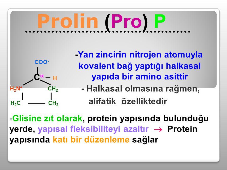 -Yan zincirin nitrojen atomuyla kovalent bağ yaptığı halkasal yapıda bir amino asittir - Halkasal olmasına rağmen, alifatik özelliktedir Prolin (Pro)