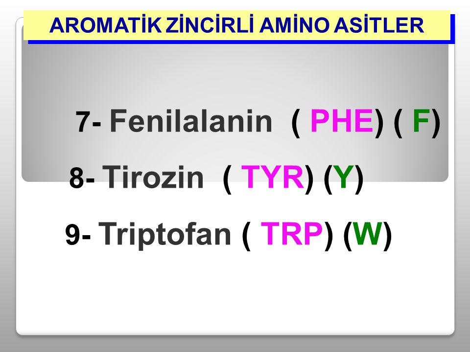 AROMATİK ZİNCİRLİ AMİNO ASİTLER 7- Fenilalanin ( PHE) ( F) 8- Tirozin ( TYR) (Y) 9- Triptofan ( TRP) (W)