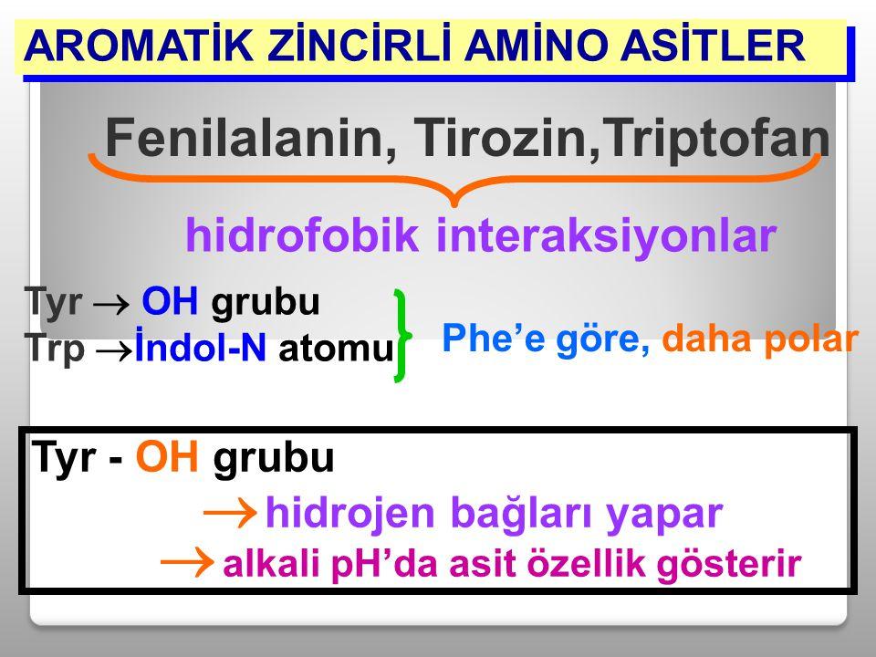 AROMATİK ZİNCİRLİ AMİNO ASİTLER Fenilalanin, Tirozin,Triptofan hidrofobik interaksiyonlar Tyr - OH grubu  hidrojen bağları yapar  alkali pH'da asit