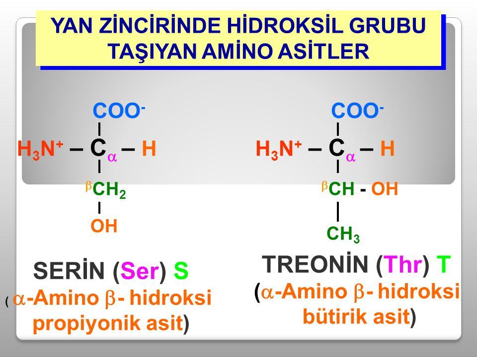 YAN ZİNCİRİNDE HİDROKSİL GRUBU TAŞIYAN AMİNO ASİTLER SERİN (Ser) S (  -Amino  - hidroksi propiyonik asit) H 3 N + – C  – H COO -  CH 2 OH TREONİN