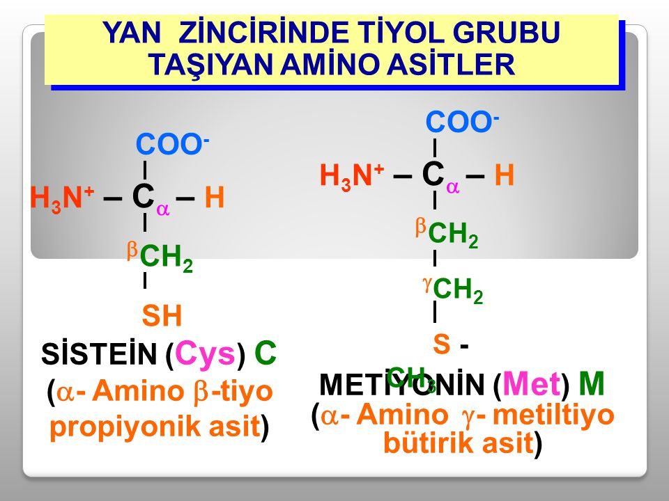 YAN ZİNCİRİNDE TİYOL GRUBU TAŞIYAN AMİNO ASİTLER SİSTEİN ( Cys ) C (  - Amino  -tiyo propiyonik asit) H 3 N + – C  – H COO -  CH 2 SH METİYONİN (