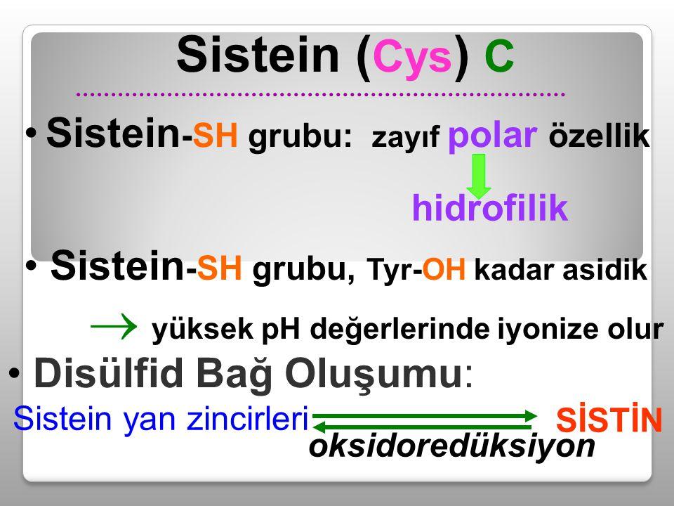 Sistein ( Cys ) C Disülfid Bağ Oluşumu: Sistein yan zincirleri SİSTİN oksidoredüksiyon Sistein -SH grubu, Tyr-OH kadar asidik  yüksek pH değerlerinde