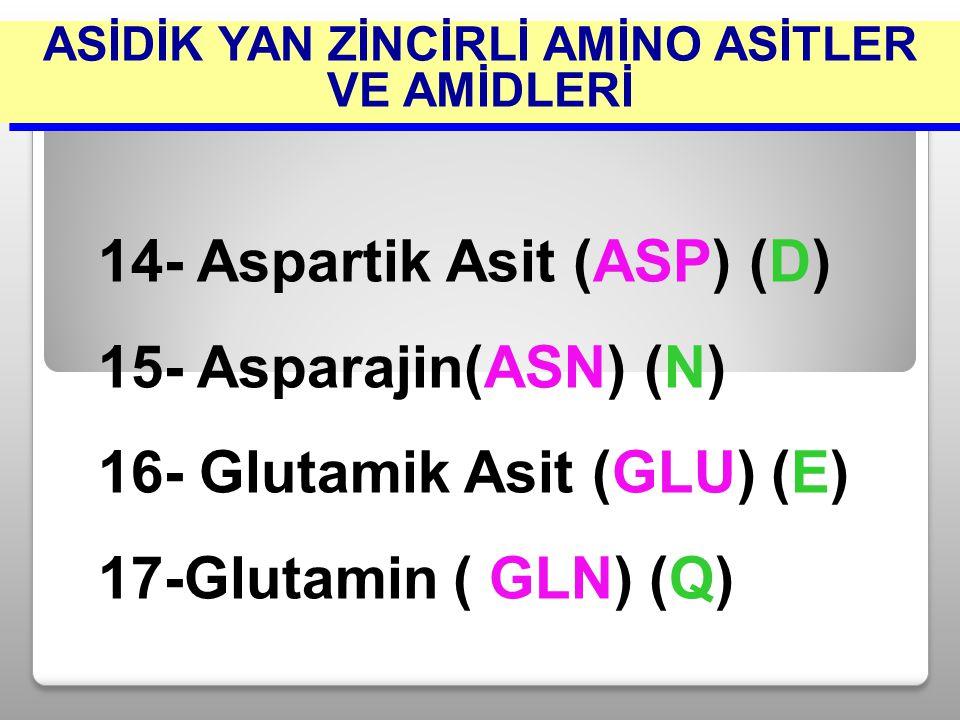14- Aspartik Asit (ASP) (D) 15- Asparajin(ASN) (N) 16- Glutamik Asit (GLU) (E) 17-Glutamin ( GLN) (Q) ASİDİK YAN ZİNCİRLİ AMİNO ASİTLER VE AMİDLERİ