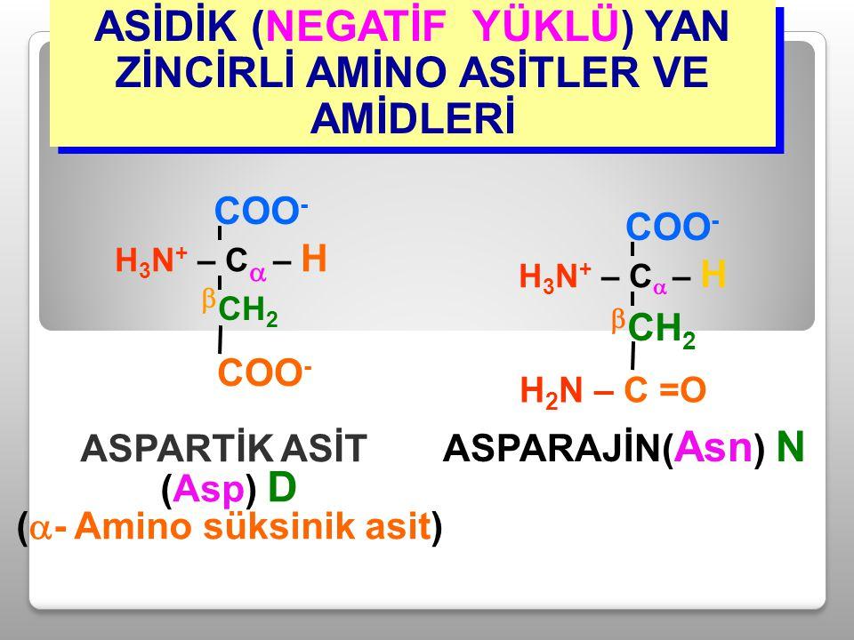 ASİDİK (NEGATİF YÜKLÜ) YAN ZİNCİRLİ AMİNO ASİTLER VE AMİDLERİ ASPARAJİN( Asn ) N H 3 N + – C  – H COO -  CH 2 H 2 N – C =O ASPARTİK ASİT (Asp) D ( 