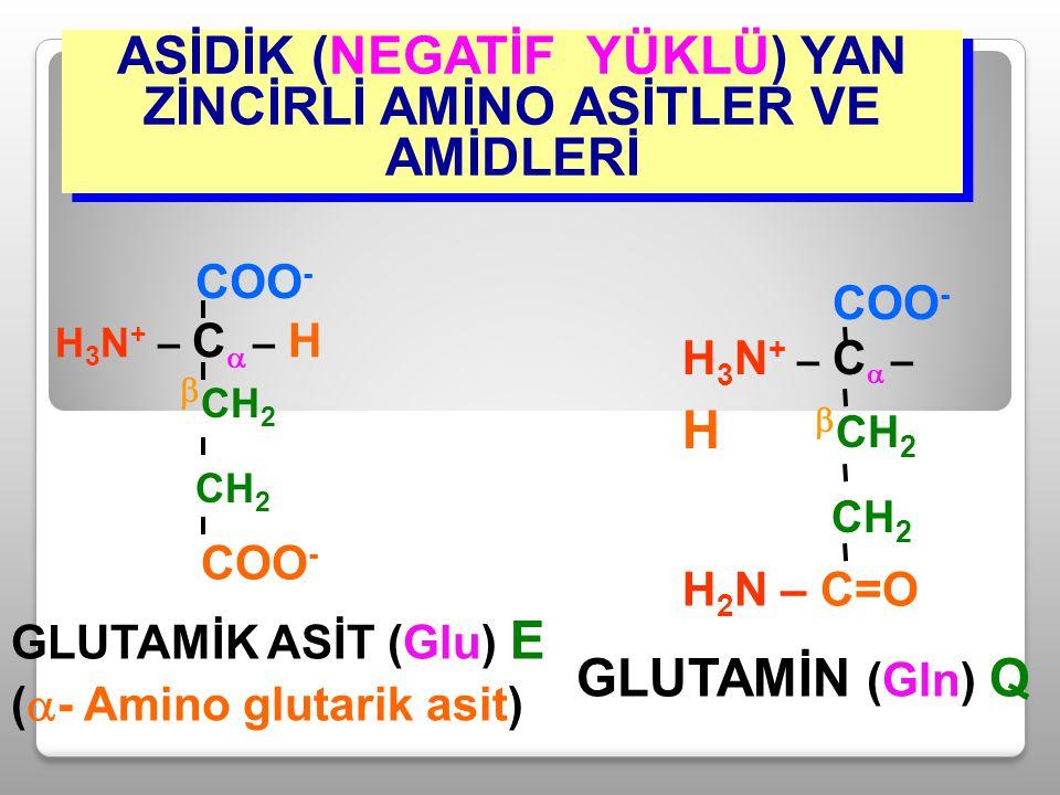 ASİDİK (NEGATİF YÜKLÜ) YAN ZİNCİRLİ AMİNO ASİTLER VE AMİDLERİ GLUTAMİN (Gln) Q H 3 N + – C  – H COO -  CH 2 CH 2 H 2 N – C=O GLUTAMİK ASİT (Glu) E (
