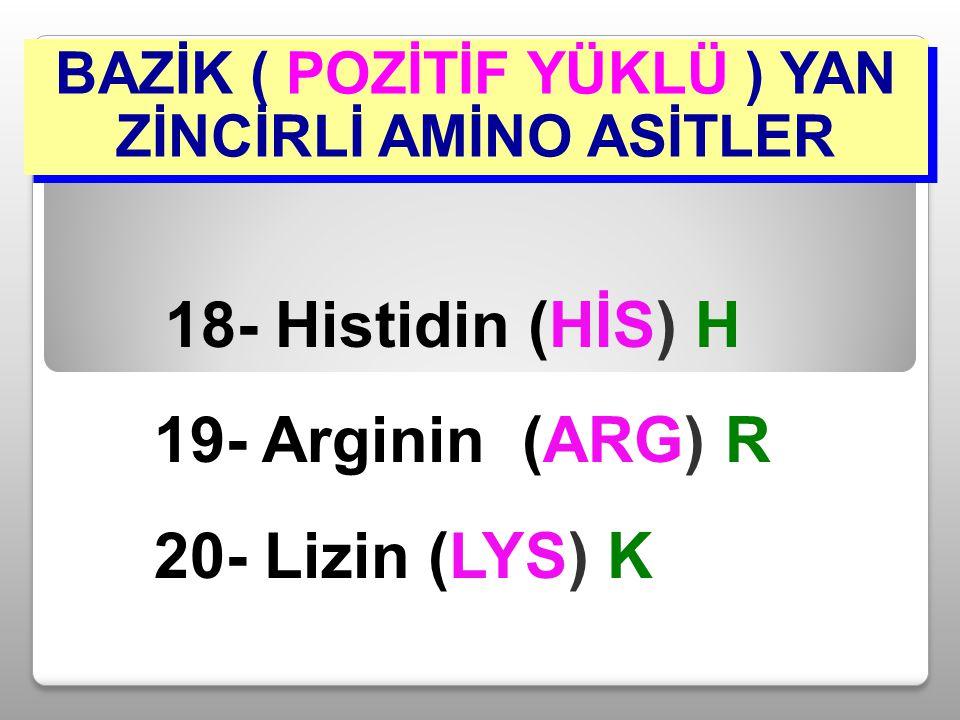 BAZİK ( POZİTİF YÜKLÜ ) YAN ZİNCİRLİ AMİNO ASİTLER 18- Histidin (HİS) H 19- Arginin (ARG) R 20- Lizin (LYS) K