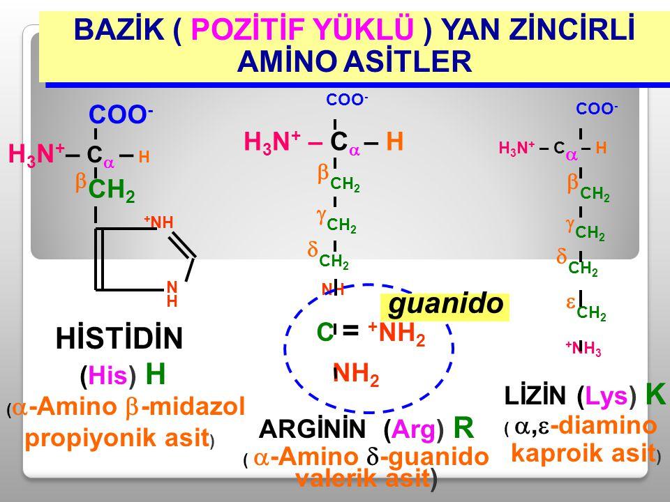 BAZİK ( POZİTİF YÜKLÜ ) YAN ZİNCİRLİ AMİNO ASİTLER  CH 2  CH 2  CH 2 NH C = + NH 2 NH 2 H 3 N + – C  – H COO - ARGİNİN (Arg) R (  -Amino  -guani