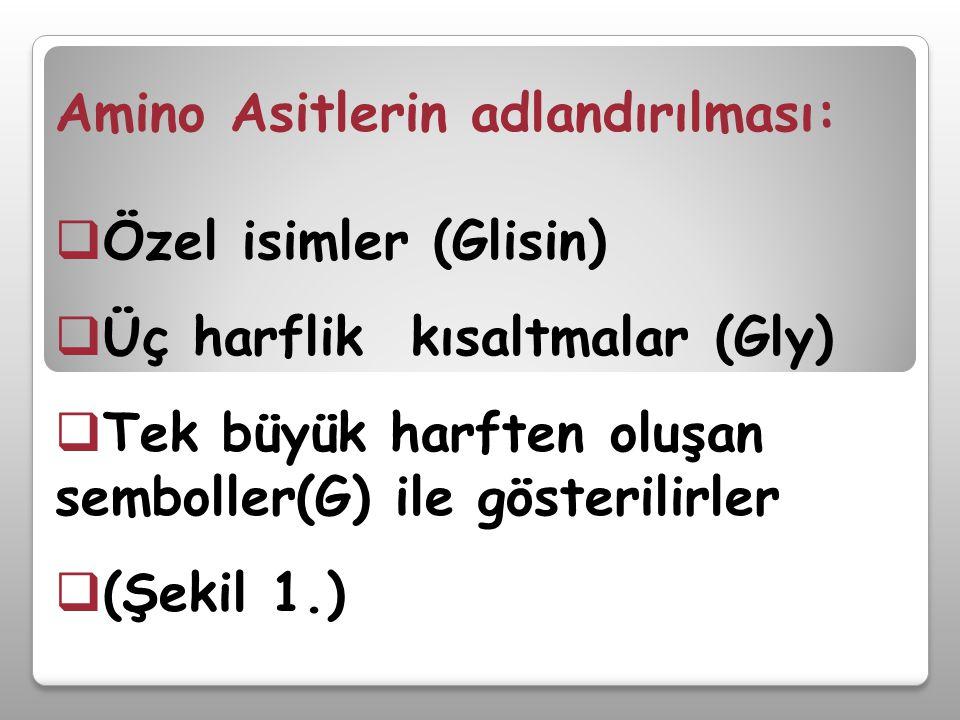 Amino Asitlerin adlandırılması:  Özel isimler (Glisin)  Üç harflik kısaltmalar (Gly)  Tek büyük harften oluşan semboller(G) ile gösterilirler  (Şe