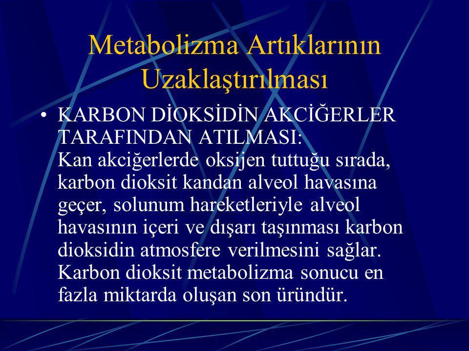 Metabolizma Artıklarının Uzaklaştırılması KARBON DİOKSİDİN AKCİĞERLER TARAFINDAN ATILMASI: Kan akciğerlerde oksijen tuttuğu sırada, karbon dioksit kandan alveol havasına geçer, solunum hareketleriyle alveol havasının içeri ve dışarı taşınması karbon dioksidin atmosfere verilmesini sağlar.
