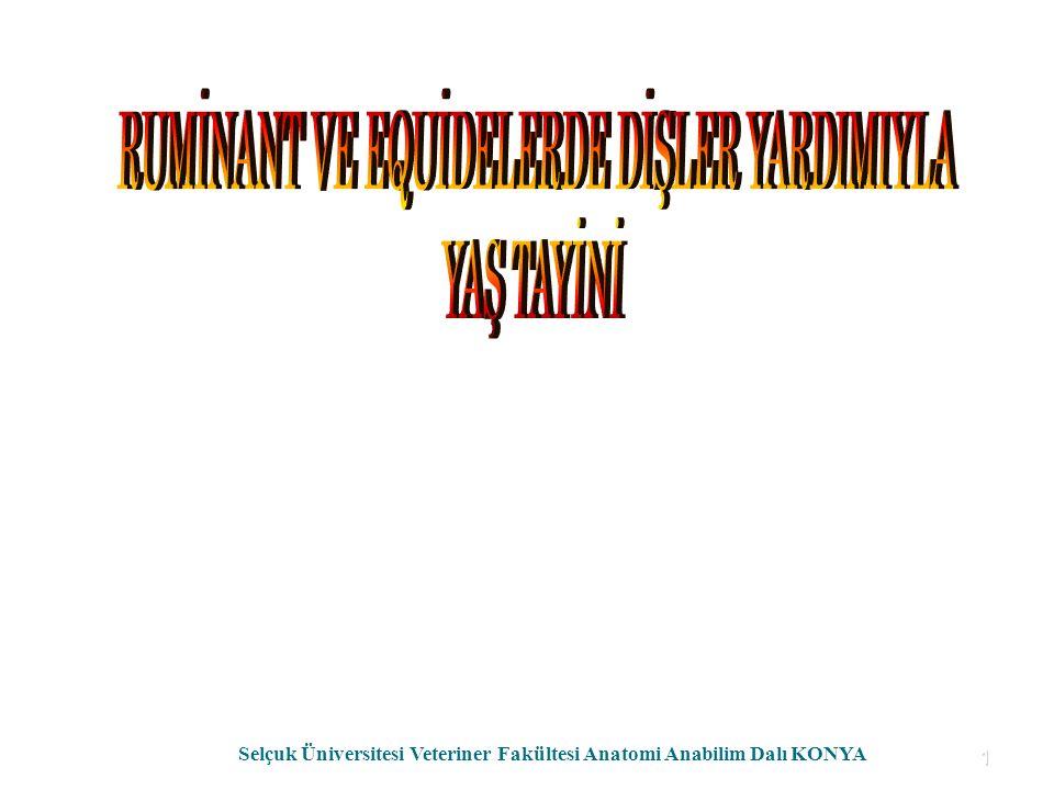 1 Selçuk Üniversitesi Veteriner Fakültesi Anatomi Anabilim Dalı KONYA